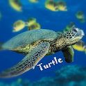 Turtle Wallpaper icon