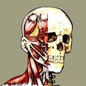 Flash Anatomy Head Neck Muscle icon