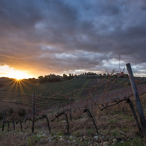 Vineyard in Tuscany at dawn by Ricky Papex - Landscapes Prairies, Meadows & Fields ( canon, italian landscape, chianti, eos, italian, florence, vineyard, landscape, 17-40, 6d, italy, l lenses,  )