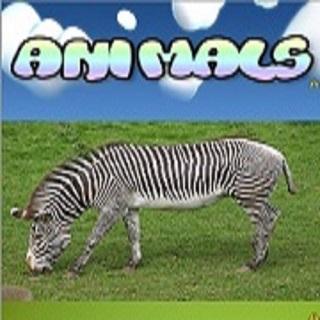 Baby Flash Card Animals