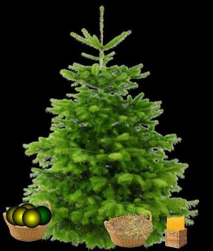 Schmücke den Tannenbaum