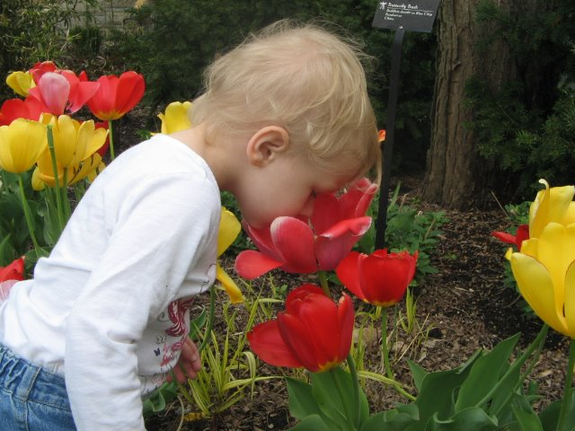 Arwen and the big tulips. by Erin Bliss - Babies & Children Toddlers
