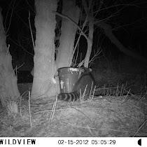 Wildlife Feeders of NC, SC, WV, KY, VA, DC & NJ