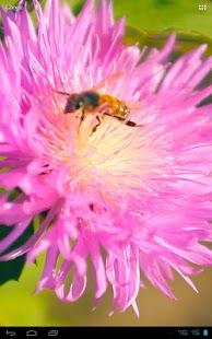 3D Bee on a Clover Flower Free - screenshot thumbnail