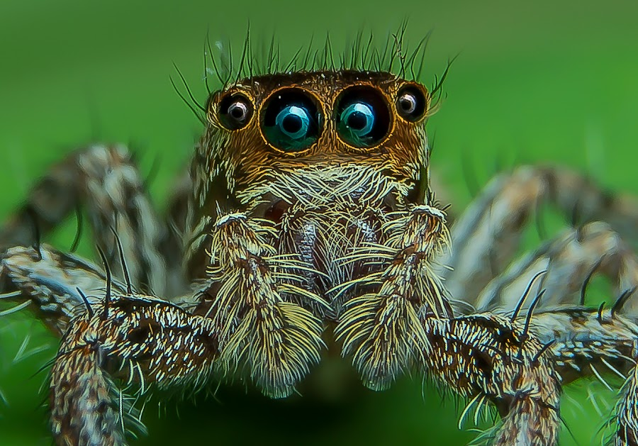 Deep Look II by Muhd Shahjeehan - Animals Insects & Spiders (  )