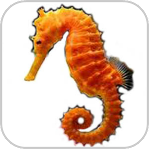 How To Draw Sea Animals for Android