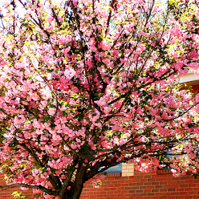 Spring Blooms by Regina Watkins - Nature Up Close Trees & Bushes ( attire, tree, blooms, spring,  )