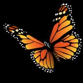 American Butterflies!
