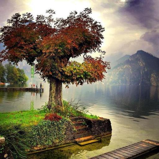 300 Autumn Tree Free Pictures 娛樂 LOGO-阿達玩APP