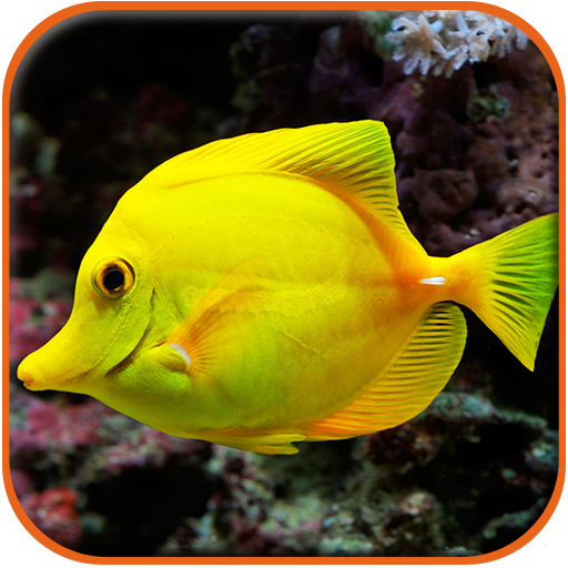 Fish HD Wallpaper LOGO-APP點子