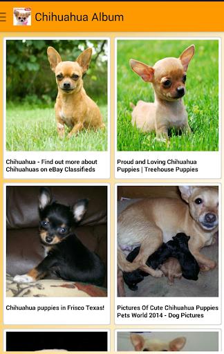 I Love Chihuahua