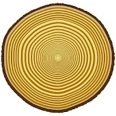 Tree Ringer:Tree Ring Counting
