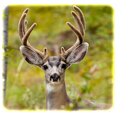 Hunters Deer Quiz - FREE