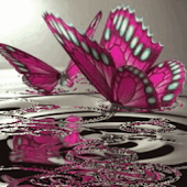 Pink Butterflies On Water Live