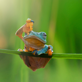 Ouch ... Glare by Robert  Fly - Animals Amphibians ( frog, green, amphibian, small, photography )