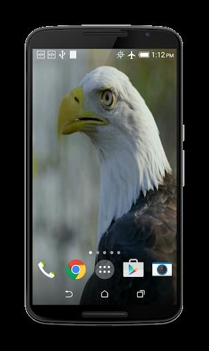 USA Eagle Live Wallpaper  screenshots 4