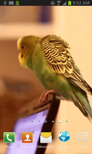 Parrot on Laptop Free LWP