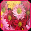 Colorful Wallpaper HD icon