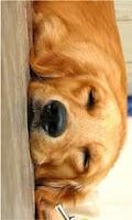 Screenshot of HD Dog Wallpaper