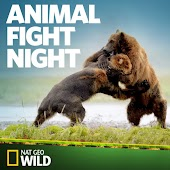 Animal Fight Night