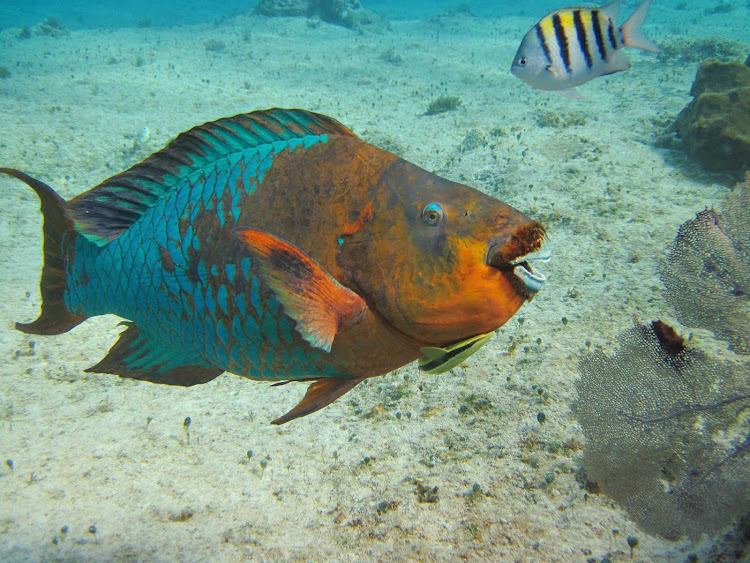 Colorful fish greet snorkelers and scuba dives off Cozumel.