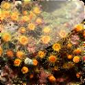3D Corals logo