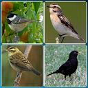 Bird Guide + Quiz Game PRO APK