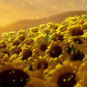 Magical Sunflowers LWP icon