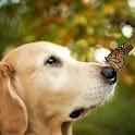 Cute Animals Wallpaper Dogs