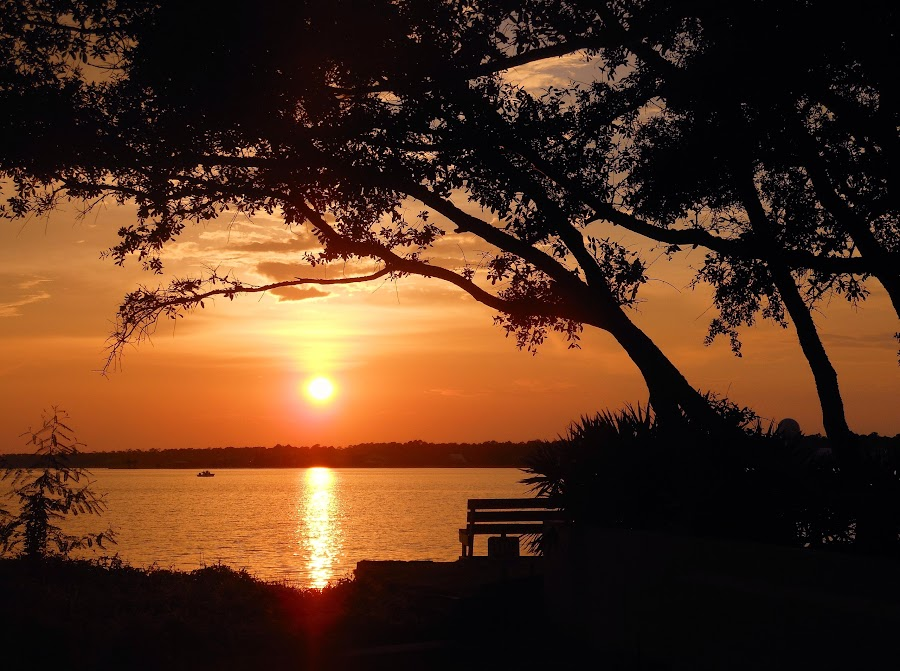 Orange Beach by Terri Cox - Landscapes Sunsets & Sunrises ( sky, sunset, beautiful, trees, beach, sunrise )