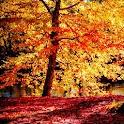 Fall Season Live Wallpaper icon
