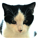 Cat Diaries icon