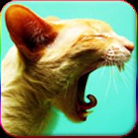 Kedi Sesleri 1.6