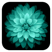 Galaxy Flowers Live Wallpaper
