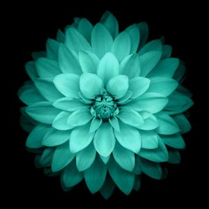 Galaxy цветы Живые обои