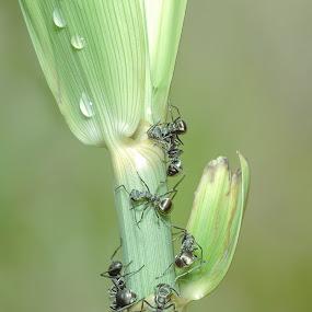 Ants by Boon Chan Gee - Uncategorized All Uncategorized