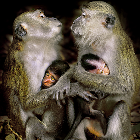 Happy Family-Thanks you !Darling! by Sam Long Fee - Animals Other ( monkey, animal )