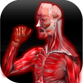 Download Anatomy Muscles APK to PC