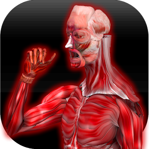 Anatomy Muscles for Android