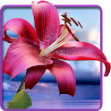 Flowers. Magic Touch Wallpaper icon