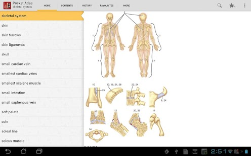 Pocket Atlas of Anatomy TR - screenshot thumbnail