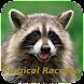 Magical Raccoon