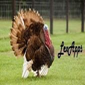 Turkey Calls Pro