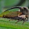 Thorned treehopper