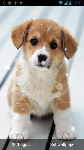小狗动态壁纸