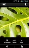 Screenshot of Green Leaves Theme