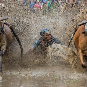 Take Off (pacu jawi) by Teddy Winanda - News & Events Sports ( minangkabau, indonesia tourism, indonesia, pacu jawi, west sumatera )