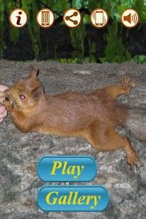 松鼠!拼圖。