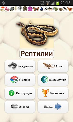 ЭкоГид: Рептилии