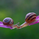 Kissing Snails Video Wallpaper icon